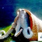 """Il polpo """"Nautilus"""""""
