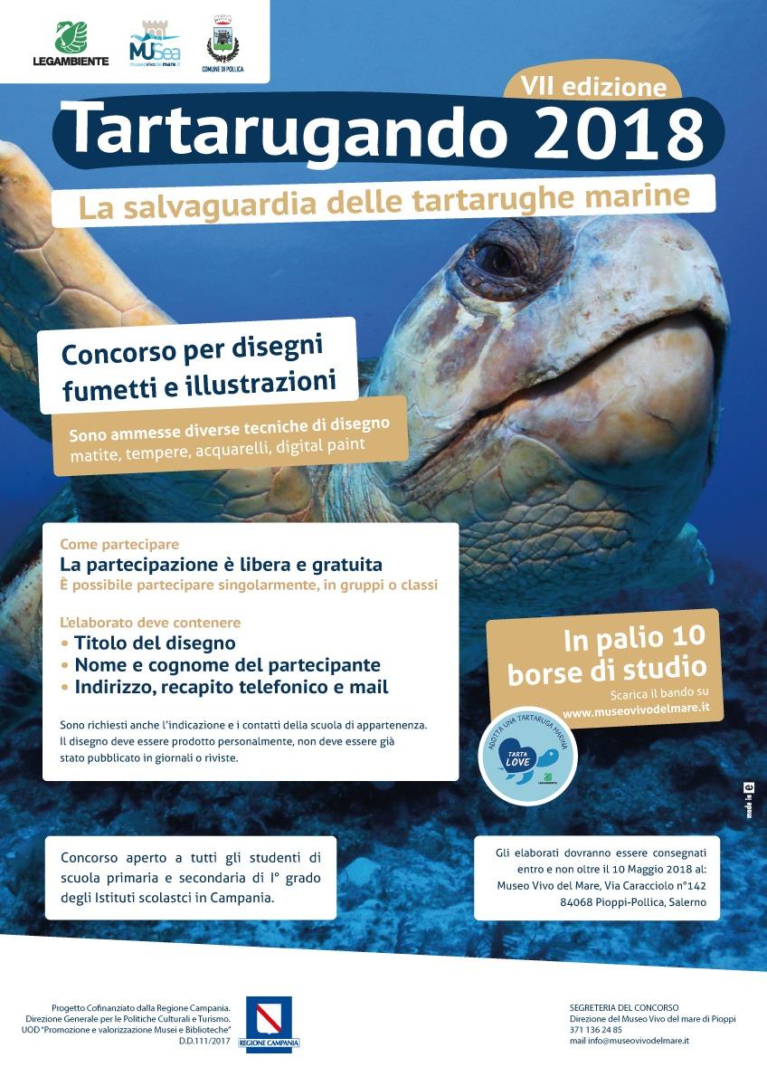 Musea museo vivo del mare pollica italy tartarugando for Vasche per tartarughe marine